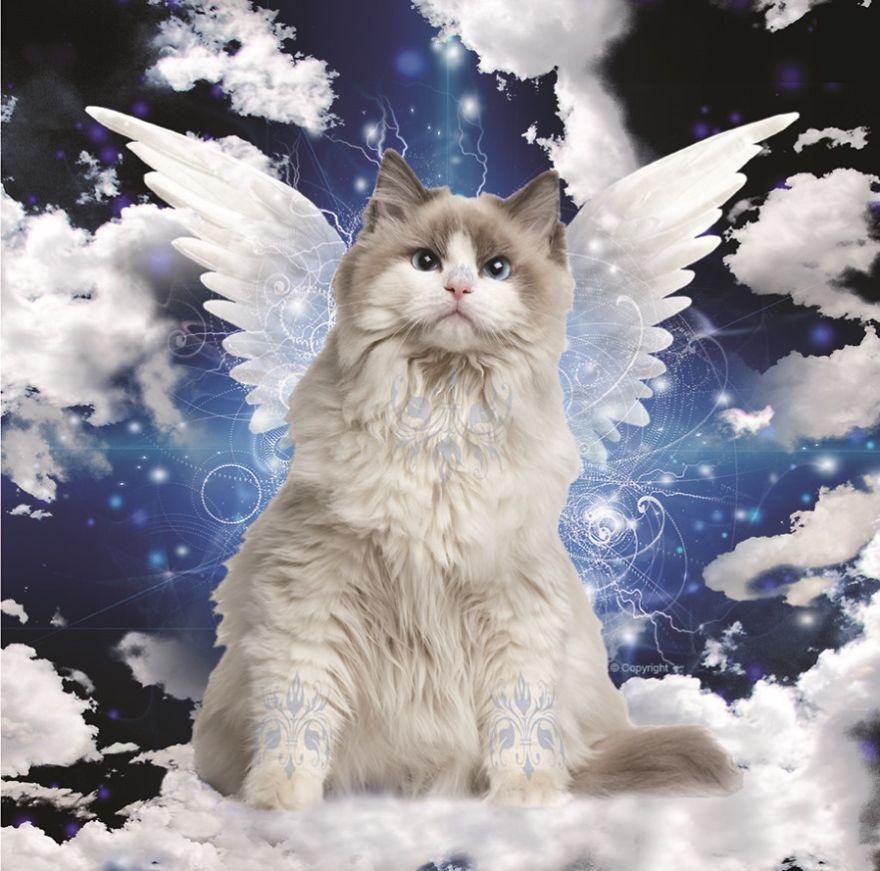 день девичника кошачий ангел фото звезды собираются