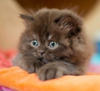 Preview Image 171766