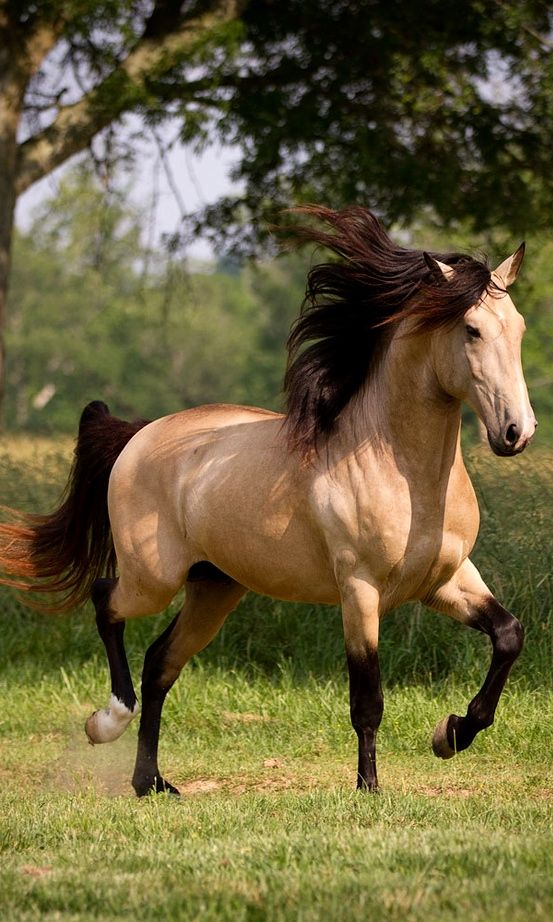 Horse Image - ID: 177513 - Image Abyss