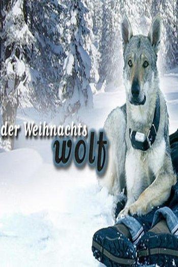 Der Weihnachtswolf