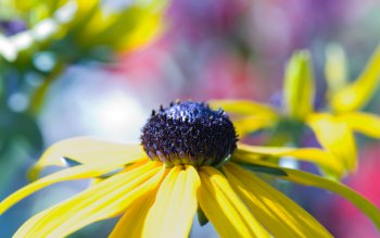 Preview Image 264727