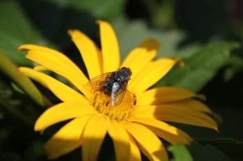 Preview Image 264780