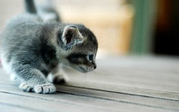 Gallery ID: 1466 cat