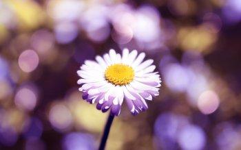 Gallery ID: 1543 Flower