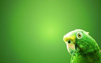 Preview Birds