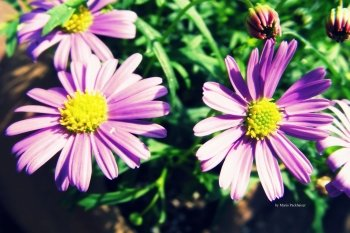 Preview Image 269805