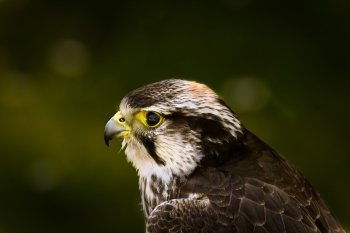 Preview Image 270875