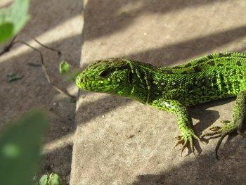 Preview Reptiles