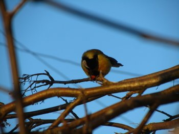 Preview Image 274730