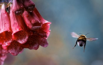 Preview Image 275076