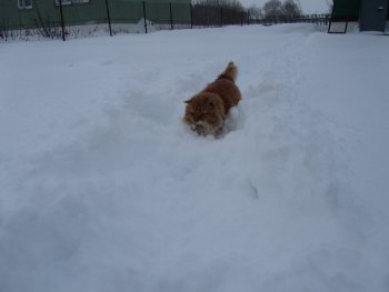 Preview Image 276411
