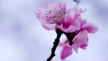 Preview Image 277595