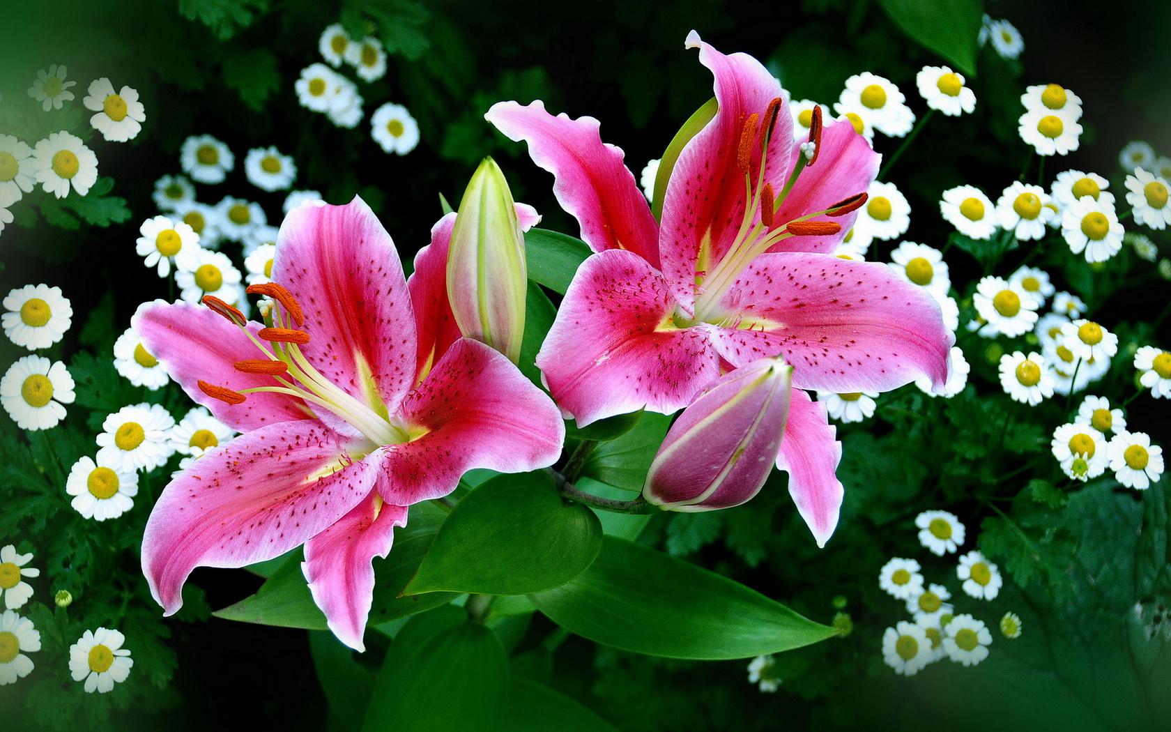 Стихах поздравление, красивая открытка лилии