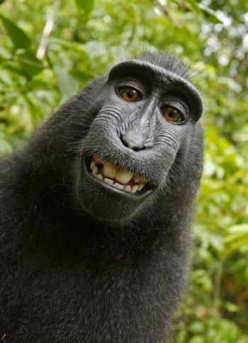 Preview ape