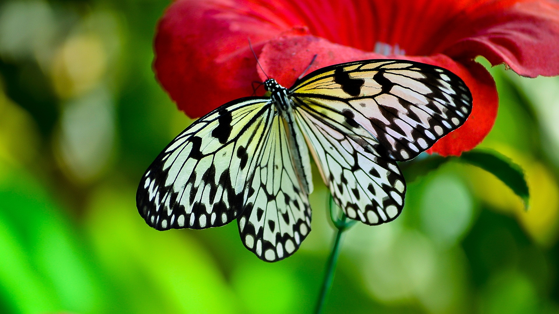 Black And White Butterfly Image Id 289607 Image Abyss