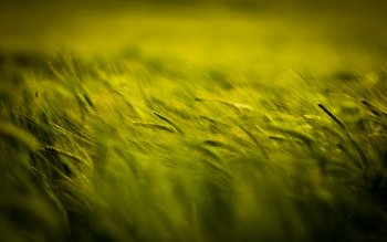 Preview Image 289591