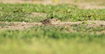 Preview Image 293641