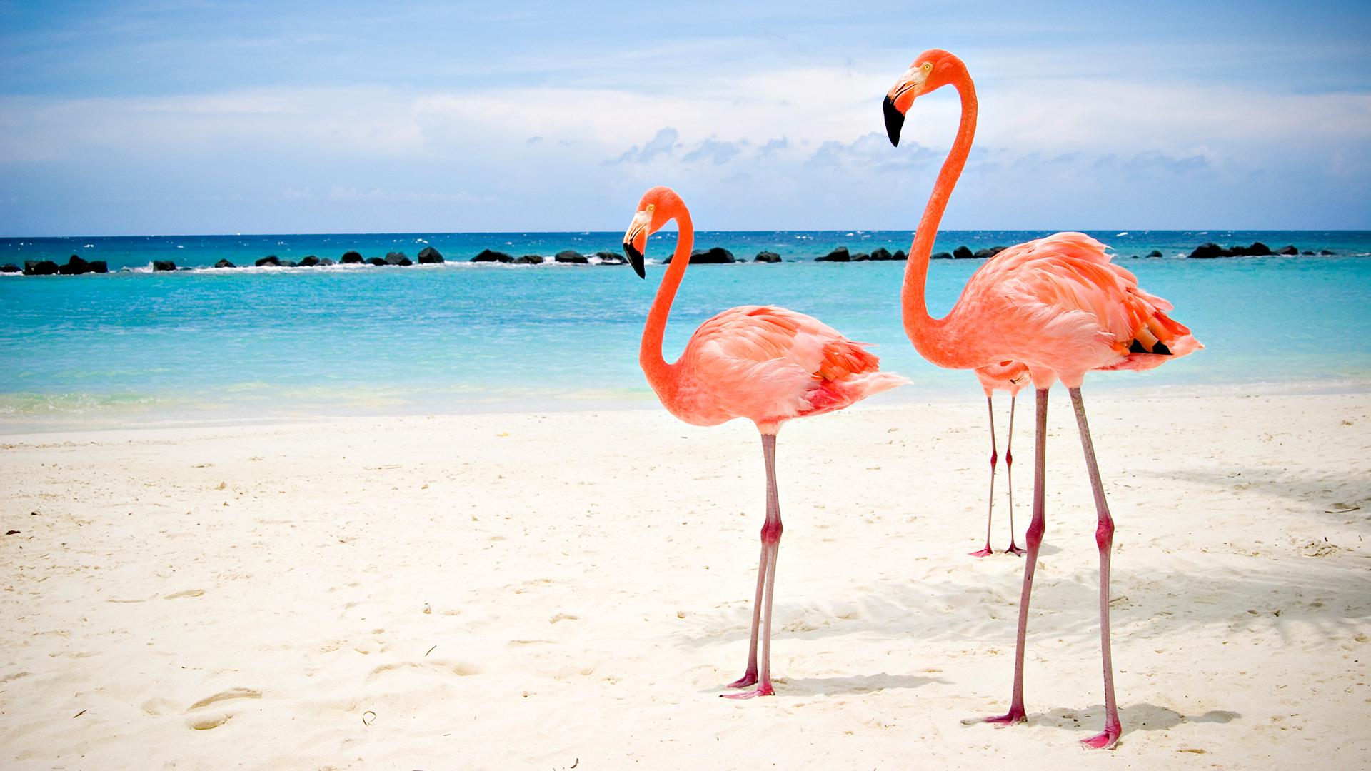 Preview Flamingos