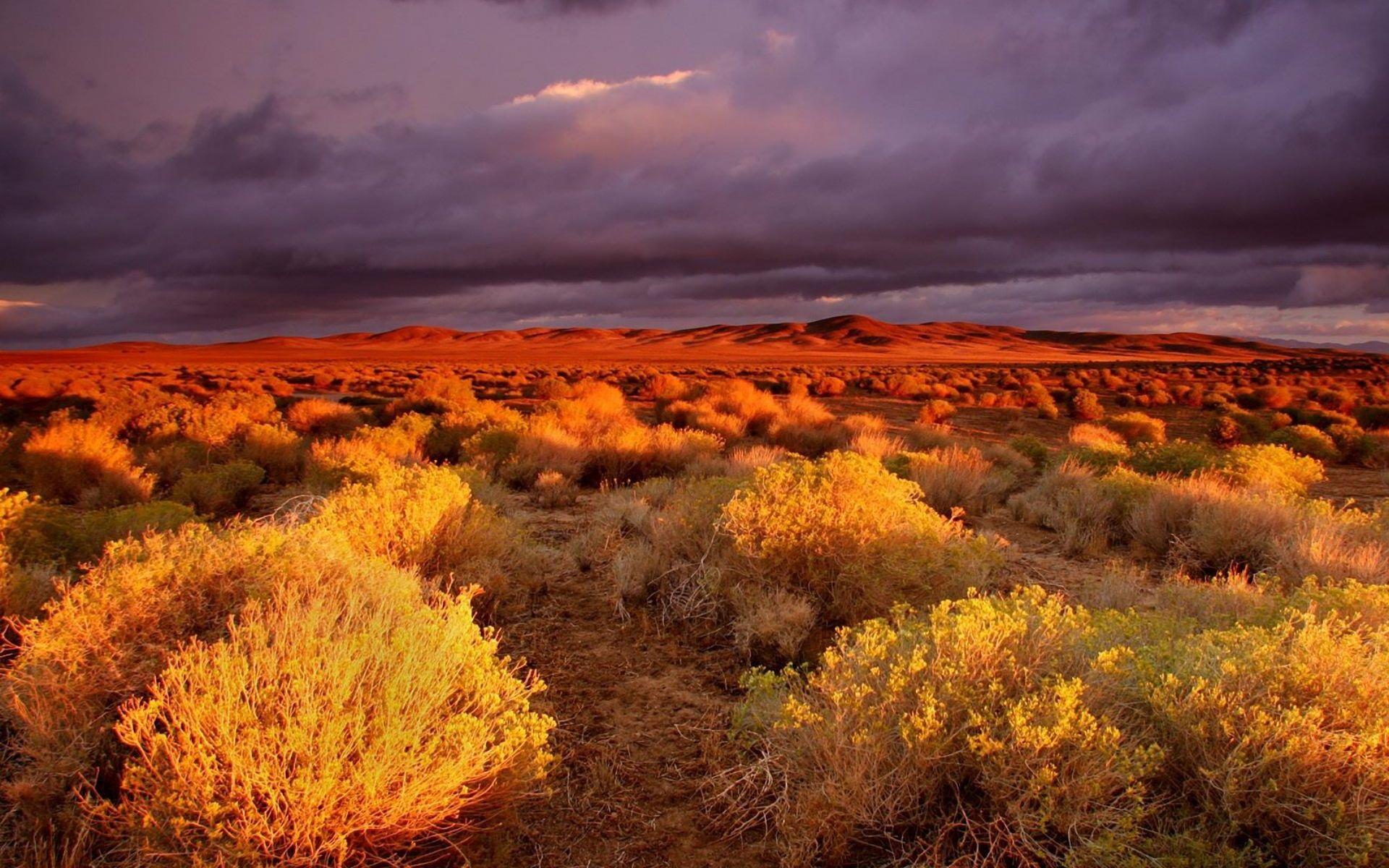 Preview Desert