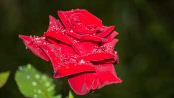 Preview Image 306908