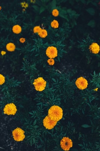Preview Flower