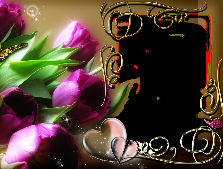Image ID: 347177