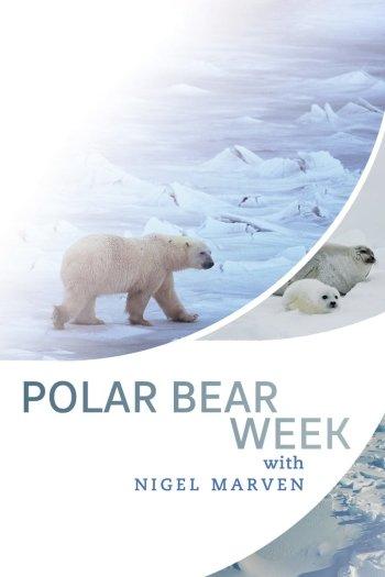 Polar Bear Week with Nigel Marven