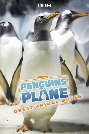 Penguins on a Plane: Great Animal Moves