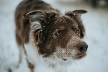 Preview Image 482092