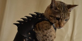 Preview Image 9981